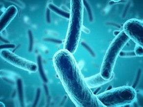 A global biotech leader in synthetic anti-infectives dual lists in Germany