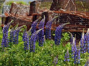 Wide Open Agriculture beginnt mit einer pflanzenbasierten Geschäftsentwicklung.