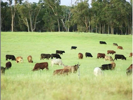 The worlds only listed regenerative agriculture company secures export licence
