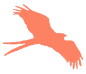 Orange Kite Logo.png