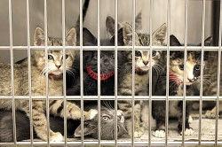cats1-250x166.jpg