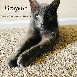 GraysonBoxPicforWebsite.png