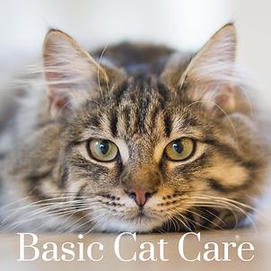 basiccatcare.png