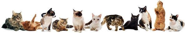 kittenscats.jpg