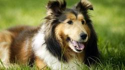 dogs-250x140.jpg