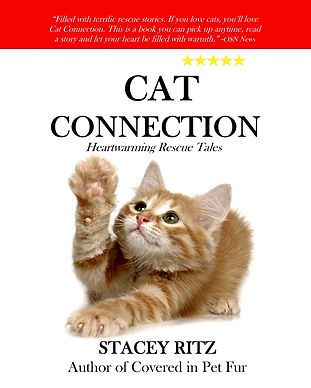 CatConnectionCover.jpg