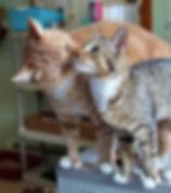 Felvcatssmall-250x282.jpg