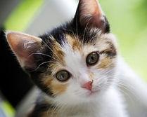 cats-250x200.jpg