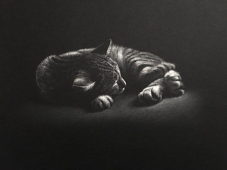 """""""Le sommeil d'Argos""""NB 1"""