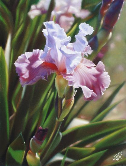 """""""Floralies dans le vent"""""""
