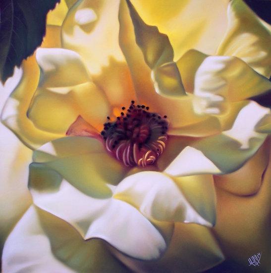 """""""Rose soleil"""""""