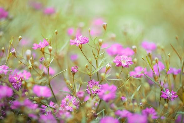 flower-5343054_1920.jpg