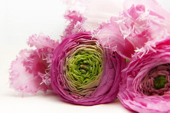 blossom-3176402_1920.jpg