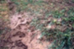 soilloss2.jpg