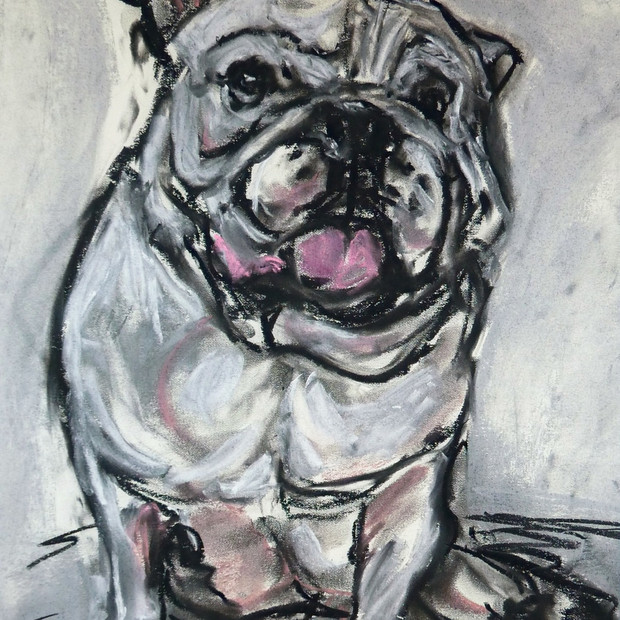 Portrait of a Bulldog