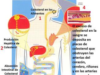 COLESTEROL, ATEROESCLEROSIS Y ARTERIAS CORONARIAS