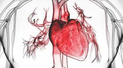 generalidades del corazon