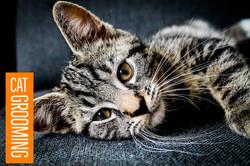 Cat Grooming (1).jpg