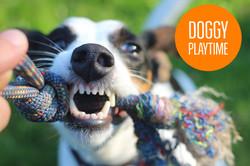 MOSA_Doggy playtime.jpg