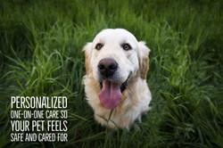 MOSA_Pet care.jpg