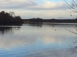 Walk 3Frensham pond.JPG