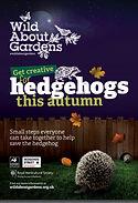 Get creative for hedgehogs.jpg