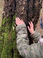 How to identify a tree by touch