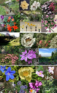 CHAPS Gardens Montage 12 May