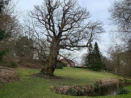 Walk 6  Old oak at Dye House