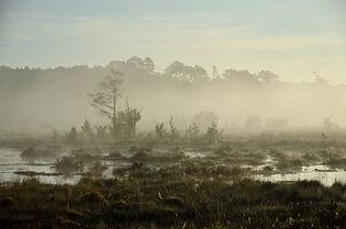Mist over a bog pond at Thursley Nationa