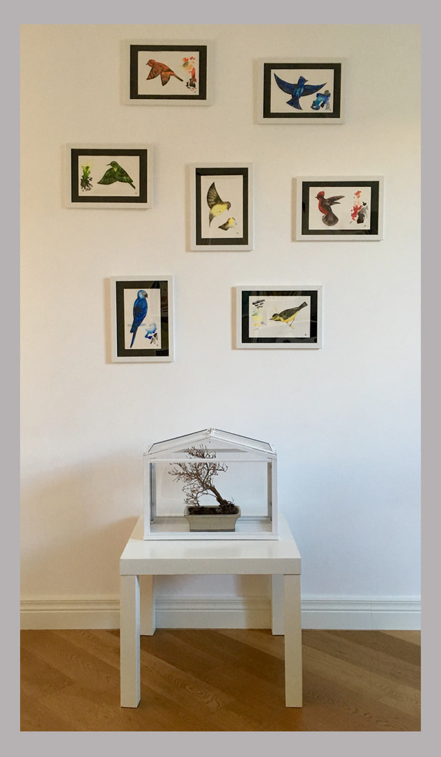 Nostra Domus Fuit, metal and plexiglass structure, dry bonsai, ceramic vase, watercolors on Hahnemühle paper, 2019.