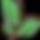 logo dv fond transp_edited.png