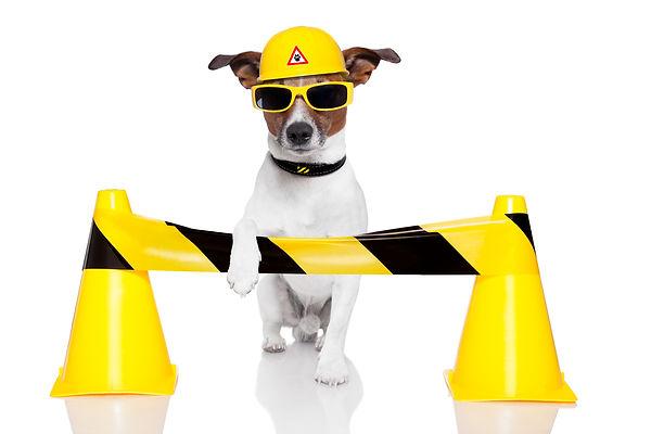 dog under construction.jpg