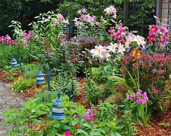 Lilies and other flowers in my cottage garden.