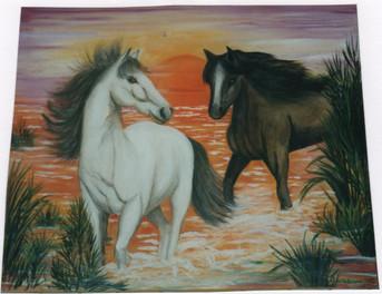2002 chevaux dans le soleil.