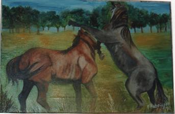 1992 combat de chevaux