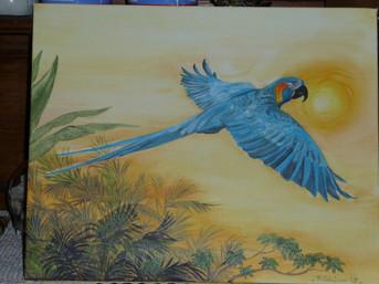 envol du perroquet