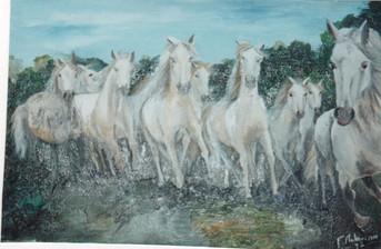 1992 chevaux camarguais