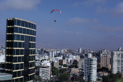 NearBirds. Peru. Lima