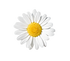 Daisy%20On%20White%20With%20Clipping%20P