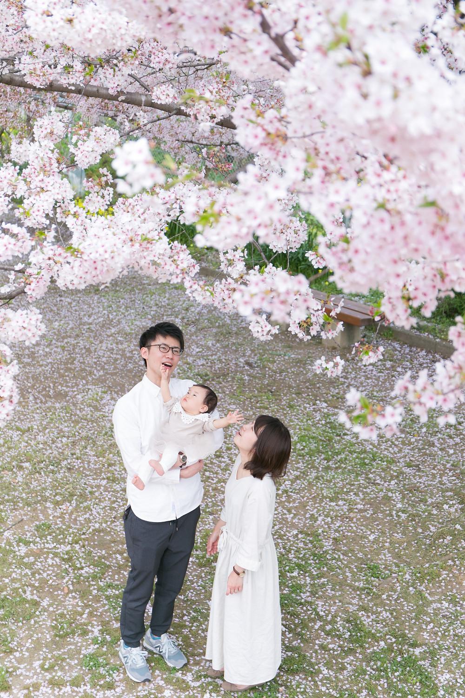 北九州 桜 フォトスタジオ