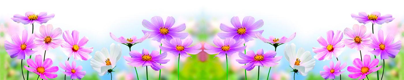 2_полевые цветы
