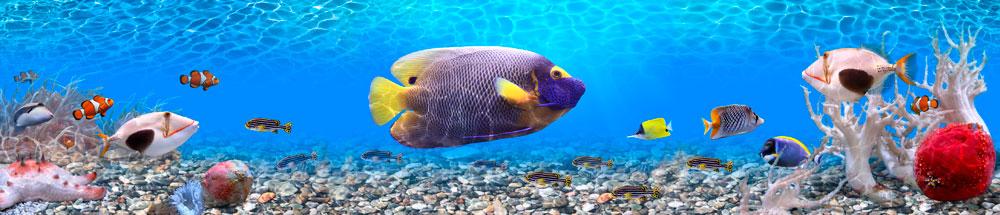 4_аквариум