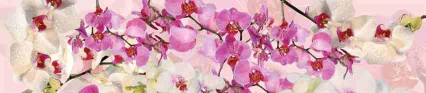 16_Орхидеи