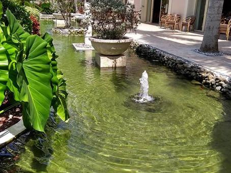 Como funciona um lago ornamental e orgânico - características básicas