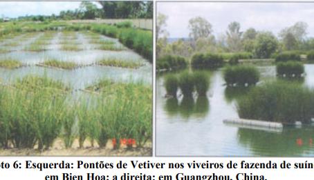 Remediação de Águas Contaminadas - Uso do Capim Vetiver