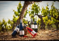 photo bouteilles dans la vigne