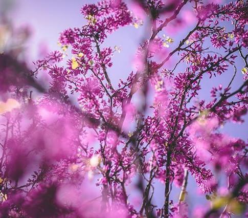 Summer vibes_____________________Taken on an _canonusa 6D _#flower #summer #ilovejlm #nature #photography #photooftheday #picoftheday #beaut