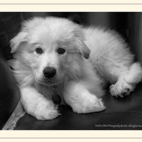 Meet Max the Dog