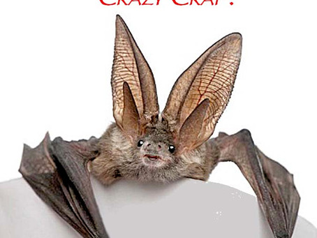 Are You Bat Shit Crazy?  Here's  A 6 Question Test!